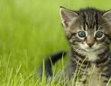 Kleine Katze in der Wiese