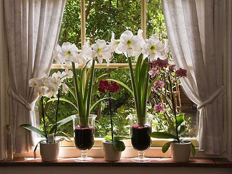 ploberger empfiehlt amaryllis radio wien. Black Bedroom Furniture Sets. Home Design Ideas