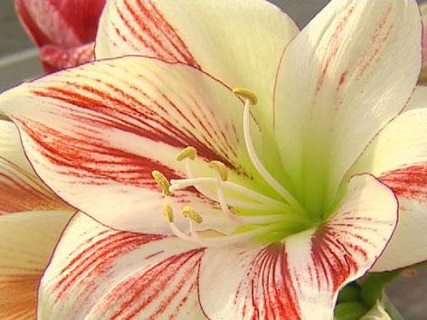 umgang mit prostituierten die blühende orchidee