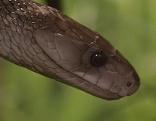 Giftige Schlangen im Reptilienzoo