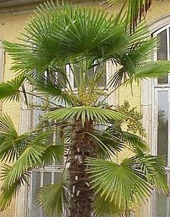 palmen durch den winter bringen - radio salzburg, Wohnzimmer