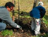 Erwachsener und Kind setzen Baum
