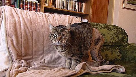 angeschossene Katze