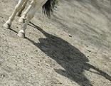 Hufe und Schatten eines Pferdes
