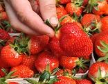 Hand greift nach Erdbeeren