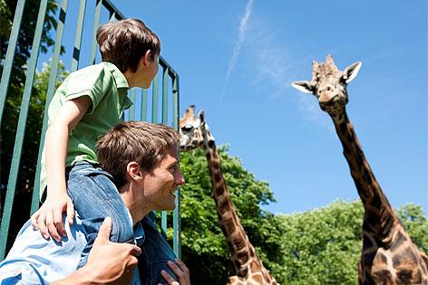 Besucher vor Giraffe im Tiergarten Schönbrunn