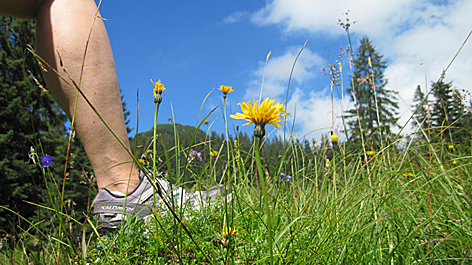 Wandern Alpinismus Alm Berglaufen Laufen Wanderung Sommerfrische Alpen Ferien Bergurlaub Tourismus Laufen