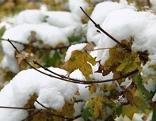 Wintereinbruch, Schnee auf Bäumen