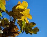 Herbstbätter