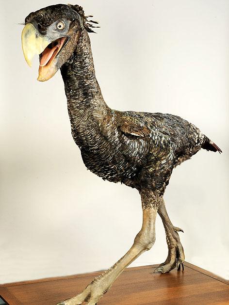Dinosaurier Vogel