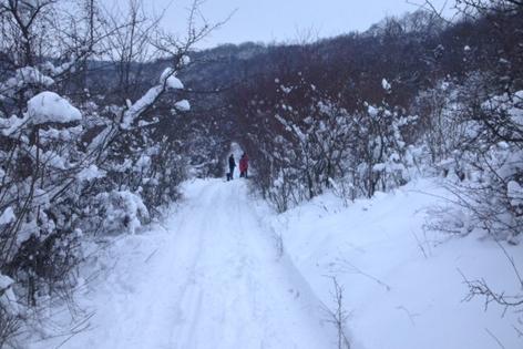 Schneebedeckter Niederwald