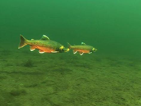 Unterwasserwelt im winter orf k rnten fernsehen for Fische halten