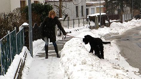 gef hrlich wenn hunde schnee fressen radio burgenland. Black Bedroom Furniture Sets. Home Design Ideas