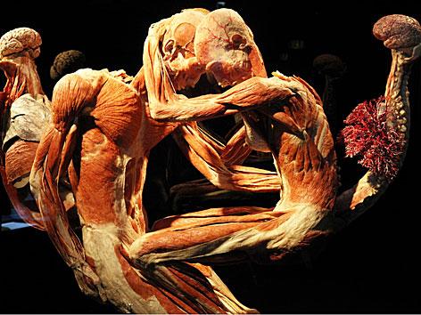 """Zwei plastinierte Leichen in der """"Körperwelten""""-Ausstellung im NHM"""
