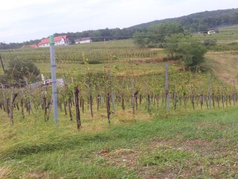 Zerstörter Weingarten
