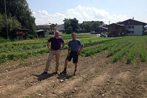 Biber Feld Verwüstet Gemüsefeld