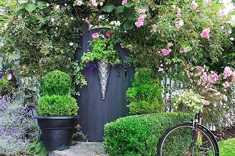 wissenswertes zur rosenpflege radio salzburg. Black Bedroom Furniture Sets. Home Design Ideas