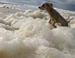 Hund im Meer