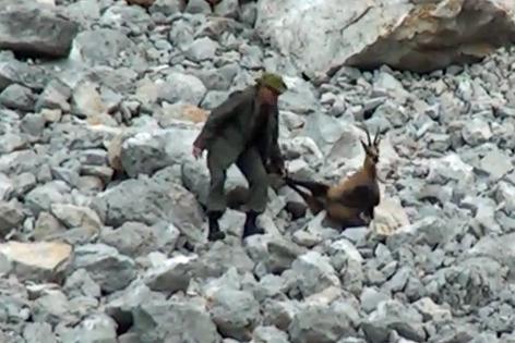 Jäger zieht blutende Gämse über Felsgestein
