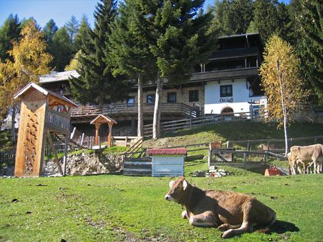 Kuh auf Wiese vor Gasthaus