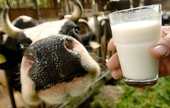 Kuh Milch Glas Hand