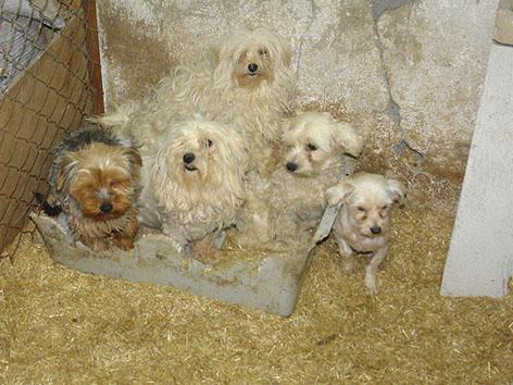 Kranke Hundewelpen