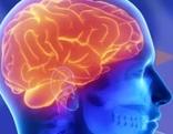 Grafik Wechselwirkung zwischen Gehirn und Herz