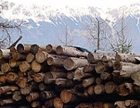 Holz, Agrargemeinschaft Mieders, gefällte Bäume