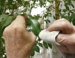 Pflege der Zimmerpflanzen