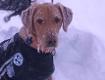 Lawinenhund Phil mit Einsatzdecke