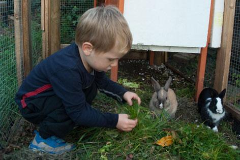 Kleiner Bub mit zwei Kaninchen