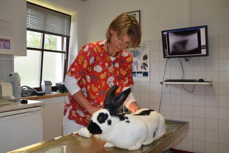 Tierärztin Dr. Daniela Jerger- Koller mit Riesenkaninchen