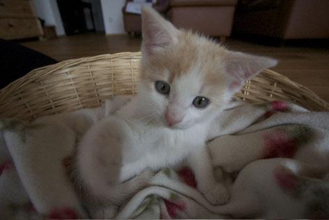 Kleine Katze im Katzenkorb