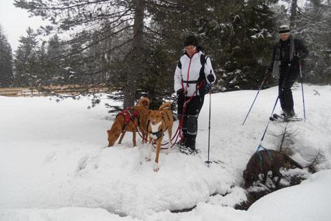 Kennenlernen hunde untereinander Pfötchenservice Markranstädt - Tiere lieben diesen Ort - Services