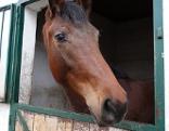 Pferd im Stall