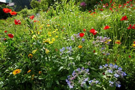 Traumhafte unordnung im naturgarten