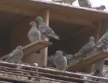 Taubenplage am Hauptbahnhof