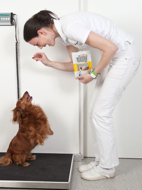 Tierärztin gibt Dackel ein Leckerli