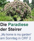 """Rosenbogen mit """"Frau Eva Schubert-Rosen (Giovannis Garten in Messendorfberg)"""