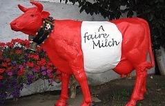 Die Kuh Faironika