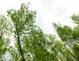 Baumspitzen in einem Wald