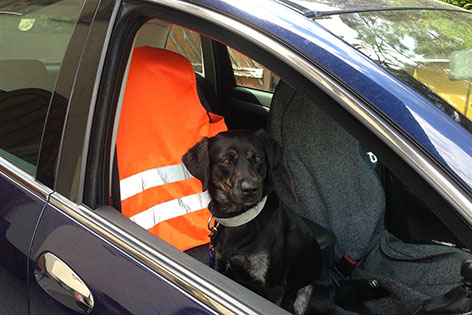 Hund auf dem Beifahrersitz
