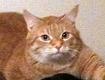 Die vermisste Katze Lucy
