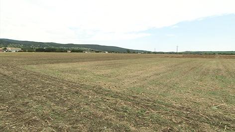 Feld bei Rechnitz, auf dem früher Kreisgrabenanlage war