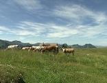 Weißenfluh Alpe
