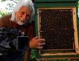 Erich Pröll an einem Bienen-Schaustock.