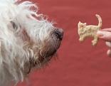 Hund mit Keks vor der Nase