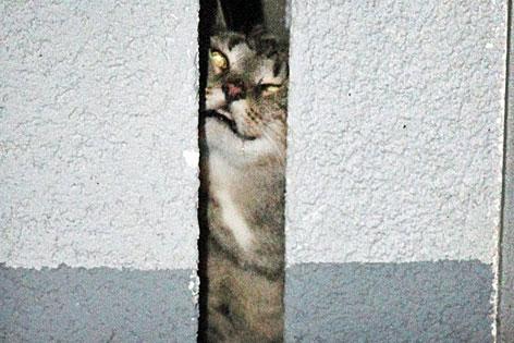 Katze in einem Mauerspalt gefangen