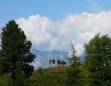 Wanderer und Kuh auf Almwiese, mit Nordkette im Hintergrund