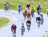 Pferde inmitten der Radfahrer